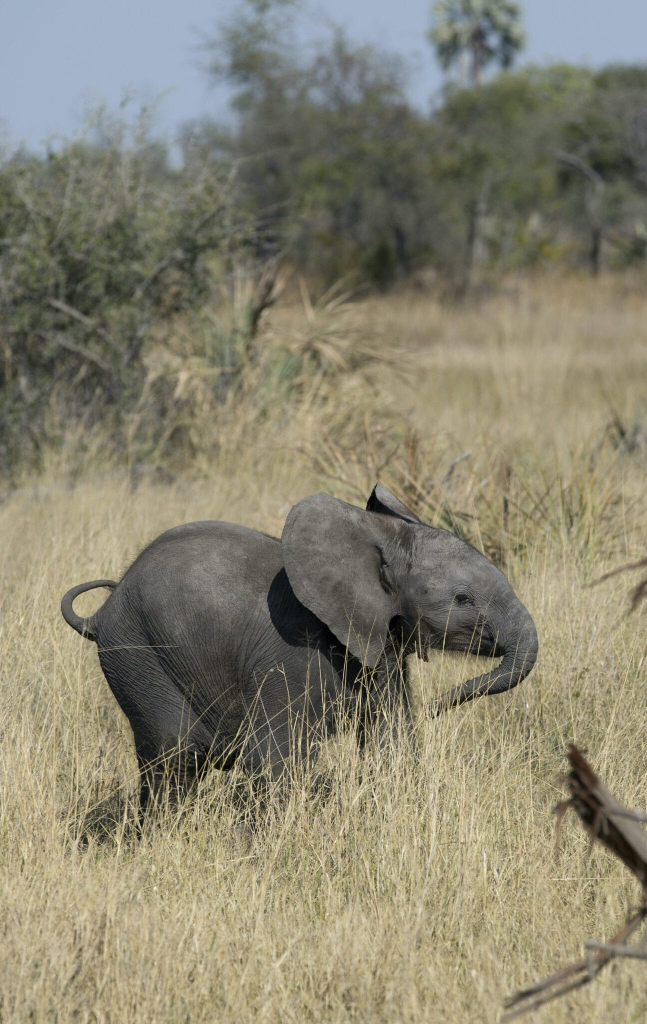 Naledi: A Baby Elephant'